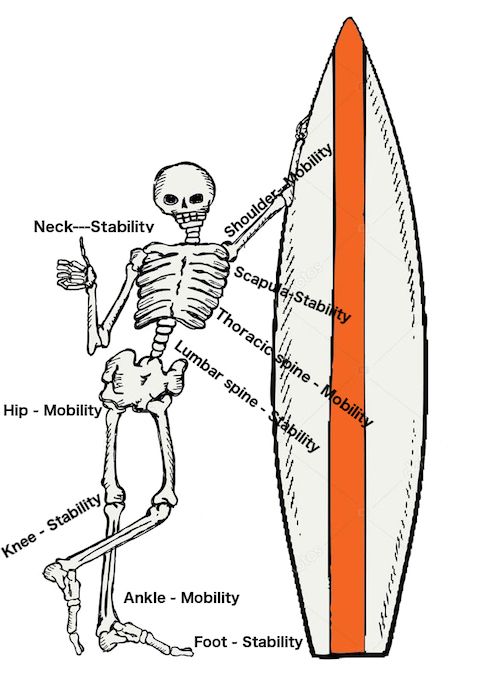 Mobility & Stability with the Aging Surfer